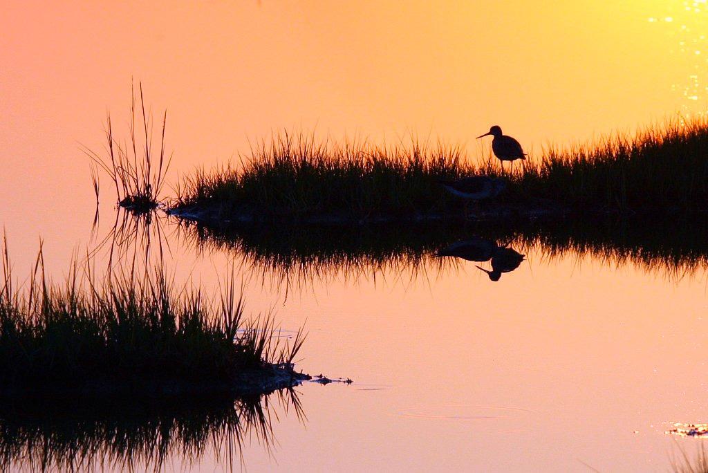 Last sunset of August, Plum Island, Parker River National Wildlife Refuge (Rowland Williams/Flickr)