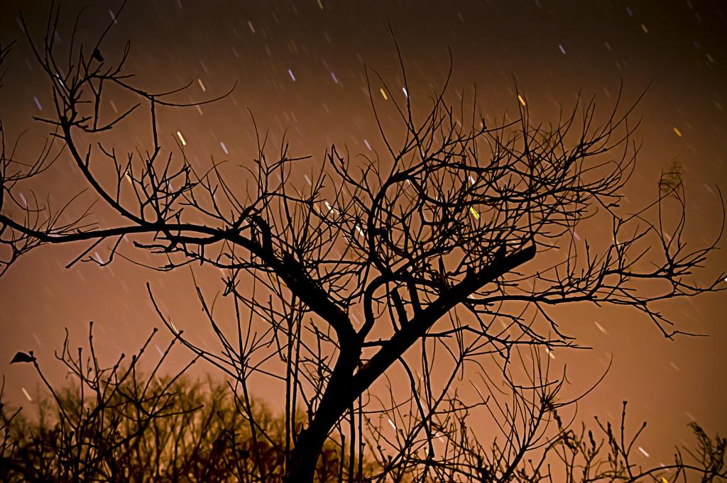 Connected (Dennis H Miller/Flickr)